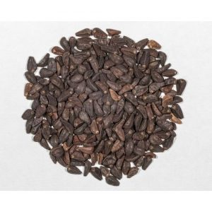 buy morning glory seeds